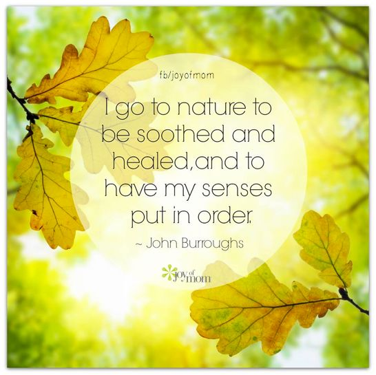 I go to nature to be soothed and healed, and to have my senses put in order. <3 Visit us for more fabulous inspirational quotes on Joy of Mom. <3 https://www.facebook.com/joyofmom  #inspirational #nature #quotes #joyofmom