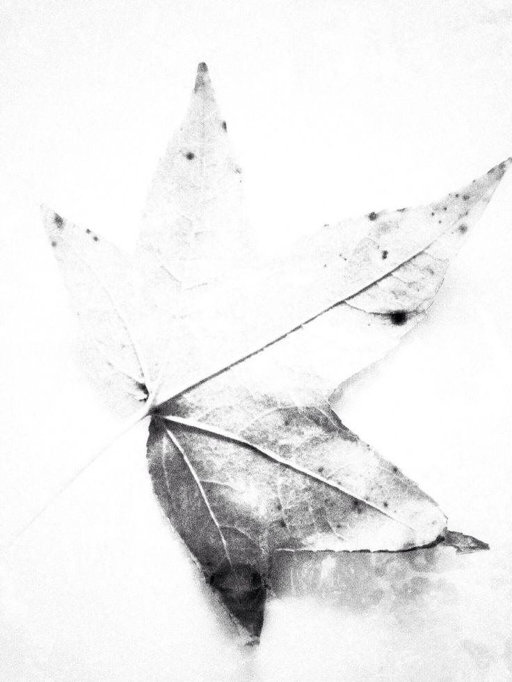 Autumn Study:  Leigh Ellen Williams