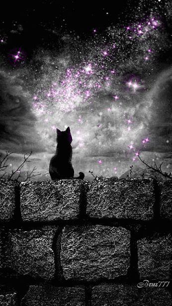 Black Cat GIF | Starry Sp ace Sky | Witch Art | Pagan | Halloween | Stars | Night