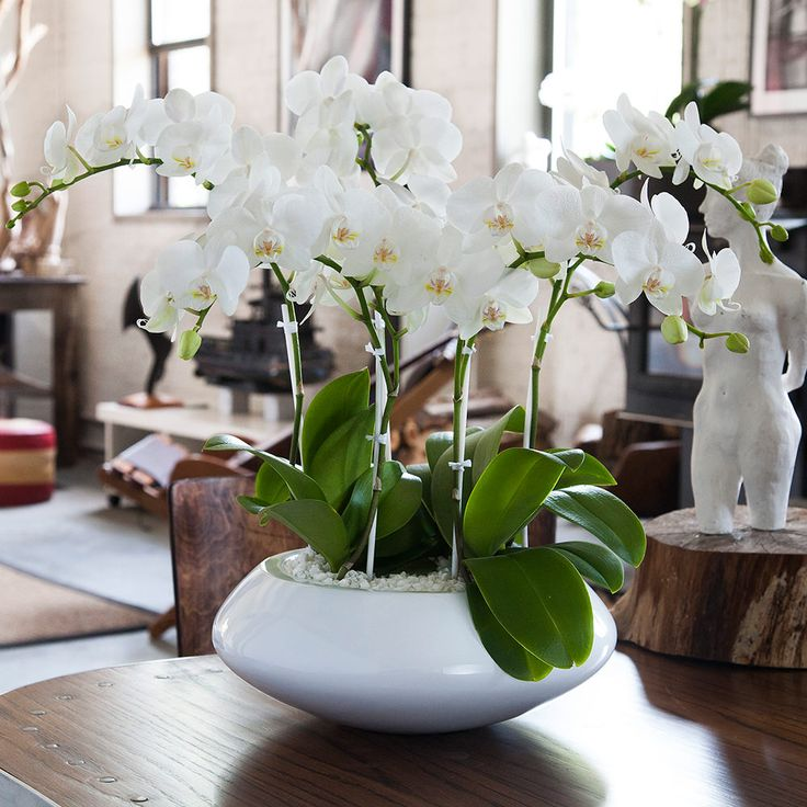 orchid arrangement Jadore White with mini white orchids
