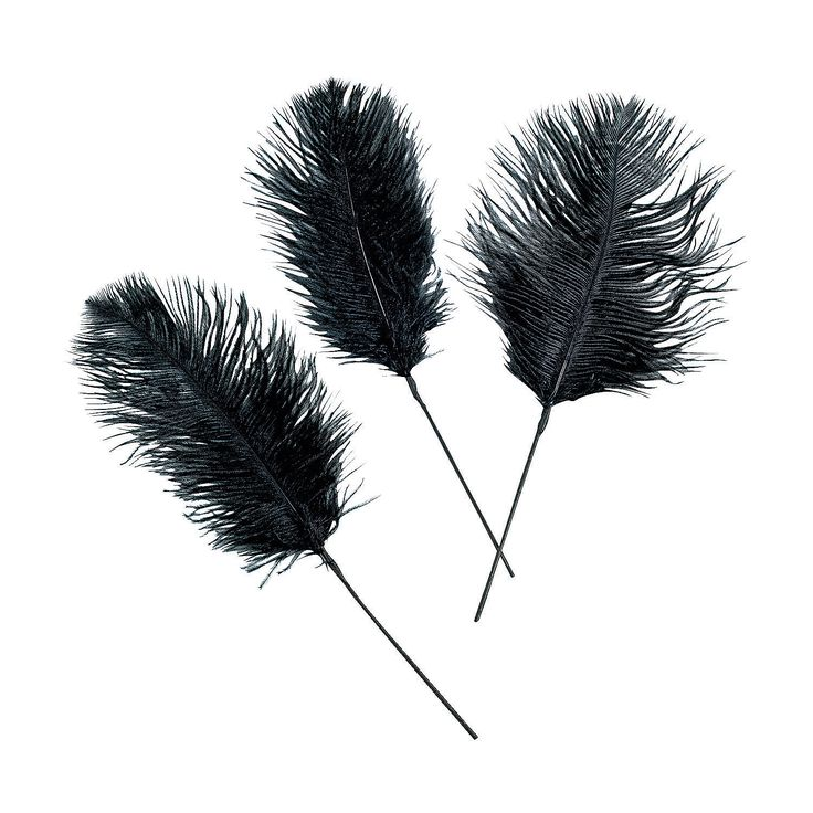 Black Ostrich Feathers - OrientalTrading.com $16.00 24 Piece(s) also come in white and red.