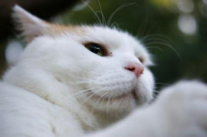แมวหง่าวนี่ มันน่าฟัดจิงๆ