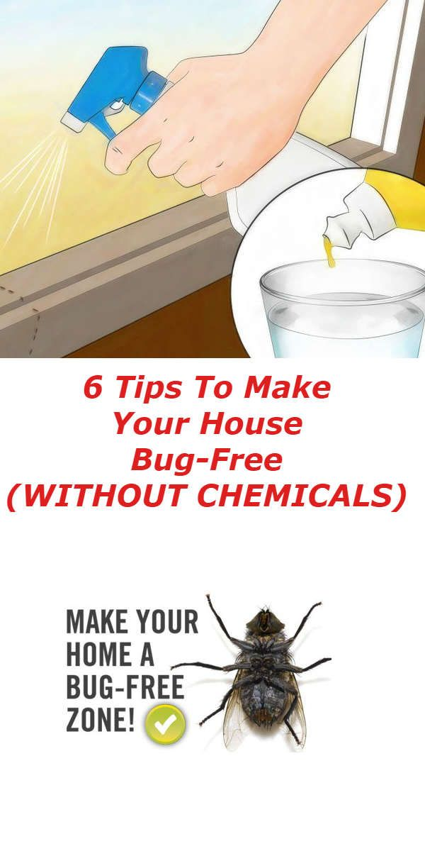 6 Tips To Make Your House Bug-Free (WITHOUT CHEMICALS) - Healthy Food Palace