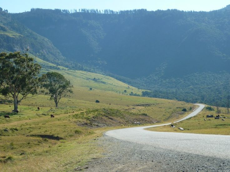 The road to Hogsback, (Eastern Cape, South Africa), a tiny little town in a nature reserve, in the Amathola Mountains. Photo by Susan Smith.