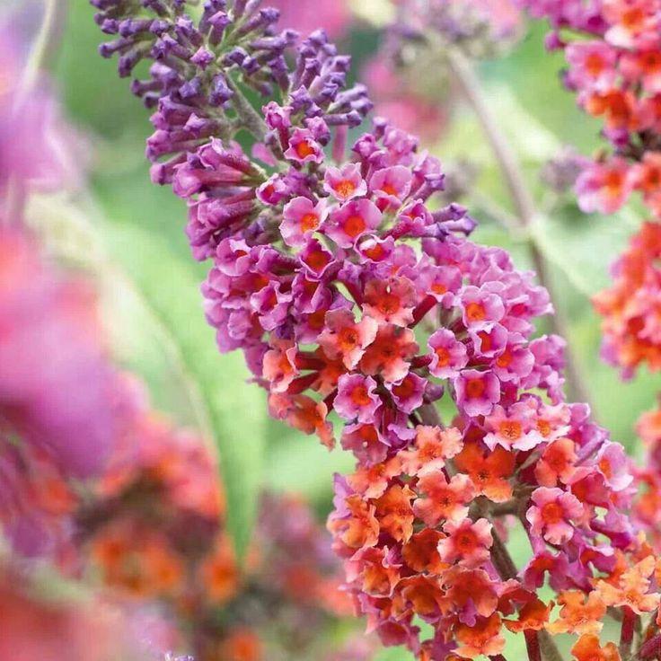 782 best Love Flowers images on Pinterest | Amazing flowers ...