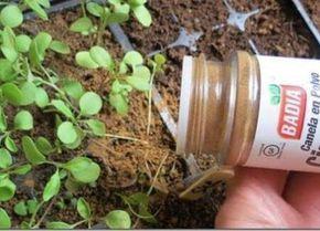 was-geschieht-wenn-du-deinen-pflanzen-zimt-hinzugibst
