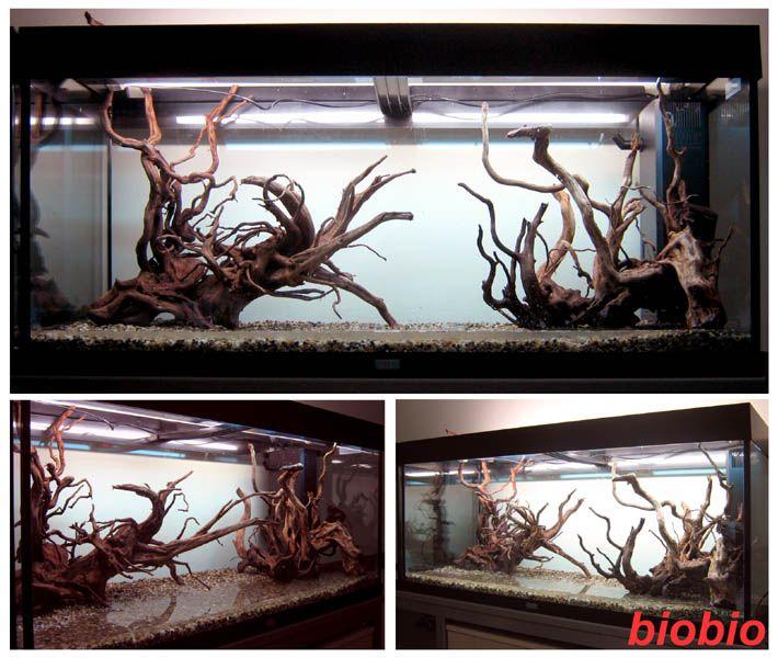 81 Best Biotope Aquarium Images On Pinterest