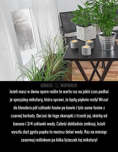 Jeżeli masz w domu sporo roślin to warto raz na jakiś czas podlać je specjalną miksturą, która sprawi, że będą ...