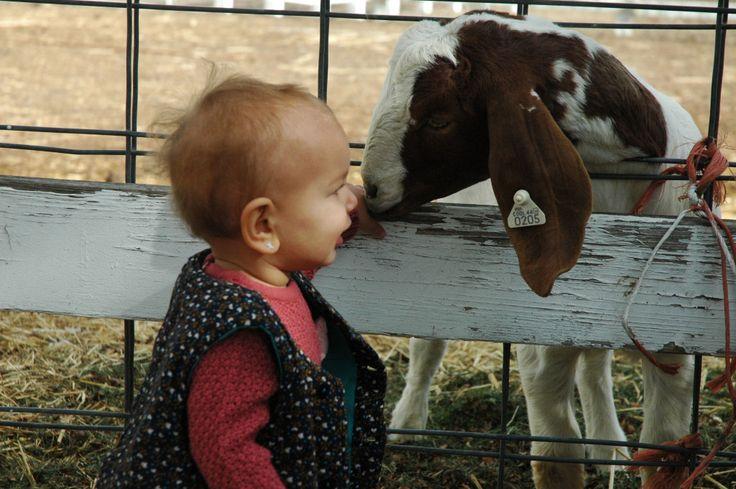 Rock Creek Farm Broomfield Colorado Pumpkin Patch Visit http://wp.me/p4esuA-Sd  #mommastyle #ootd #momblog #mommablogger #denver #denverblog #denverblogger #denvermomblog #denvermommablog #colorado #coloradomom #coloradomomblog #blogger #haleebandhoney $denverstyle #coloradostyle #kids #coloradokids #denverkids #kidsstyle #baby #parentingblog #lifestyleblog #blog