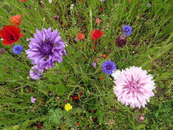 Dinard * Flowers