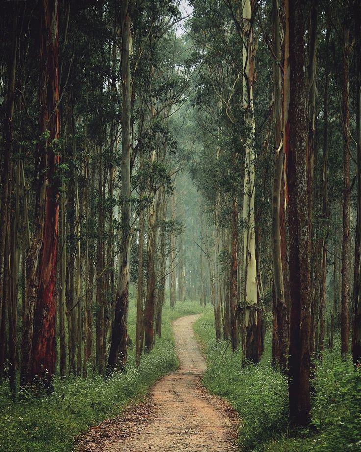 Muthanga Wildlife Sanctuary, Wayanad, Kerala, India