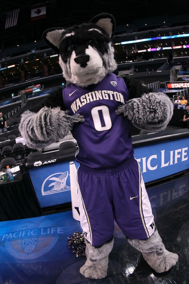Harry the Husky – Washington Huskies