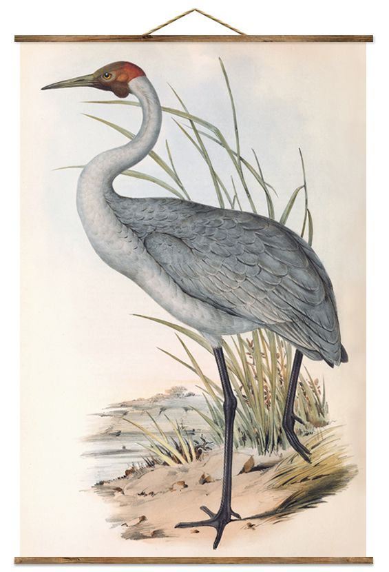 Free printable large-scale bird posters | The Painted Hive  sc 1 st  Pinterest & 50 best Printables images on Pinterest | Free printables Free ... 25forcollege.com
