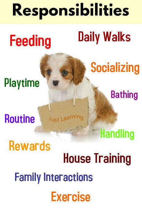 Φοιτητής και κατοικίδιο. Yπάρχουν μερικά πράγματα που πρέπει να σκεφτείς προτού αποκτήσεις έναν σκύλο.