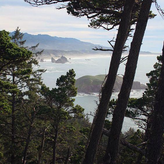 Along the Cape Sebastian trail, catch breathtaking views of the southern Oregon coast.