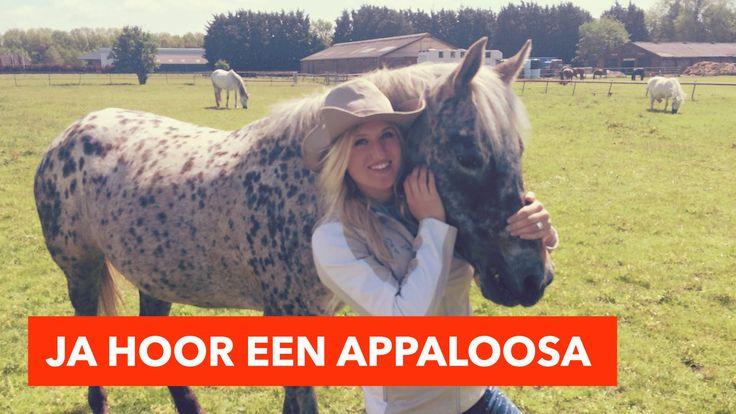 Ja hoor een Appaloosa | PaardenpraatTV