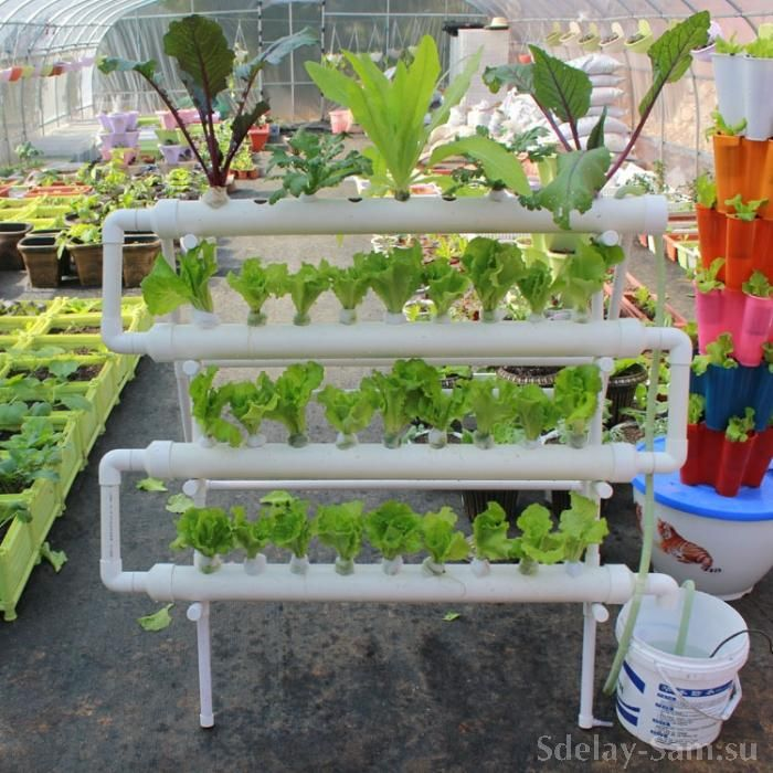 The cultivation of plants in the beds of plastic pipes                                                                Выращивание растений на грядках из пластиковых труб