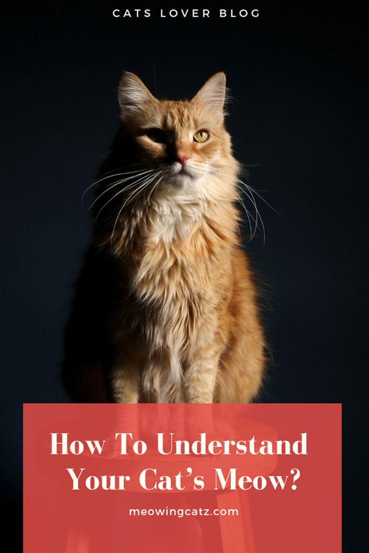 Cat S Meows And What They Mean Cats Cat Behavior Cat Care