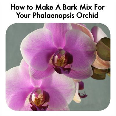 How to Make A Bark Mix For Your Phalaenopsis Orchid?