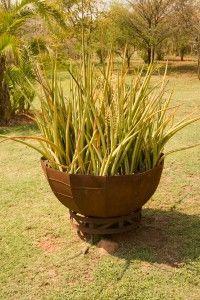 The Best Low Light Plants - Sansevieria
