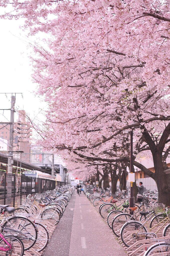 Drag Me Down Lockscreens Google Search Pink Fotografi Bawah Air Wisata Jepang Fotografi Alam