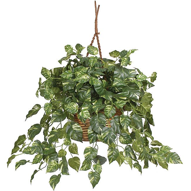 Nearly Pothos Silk Plant in Hanging Basket