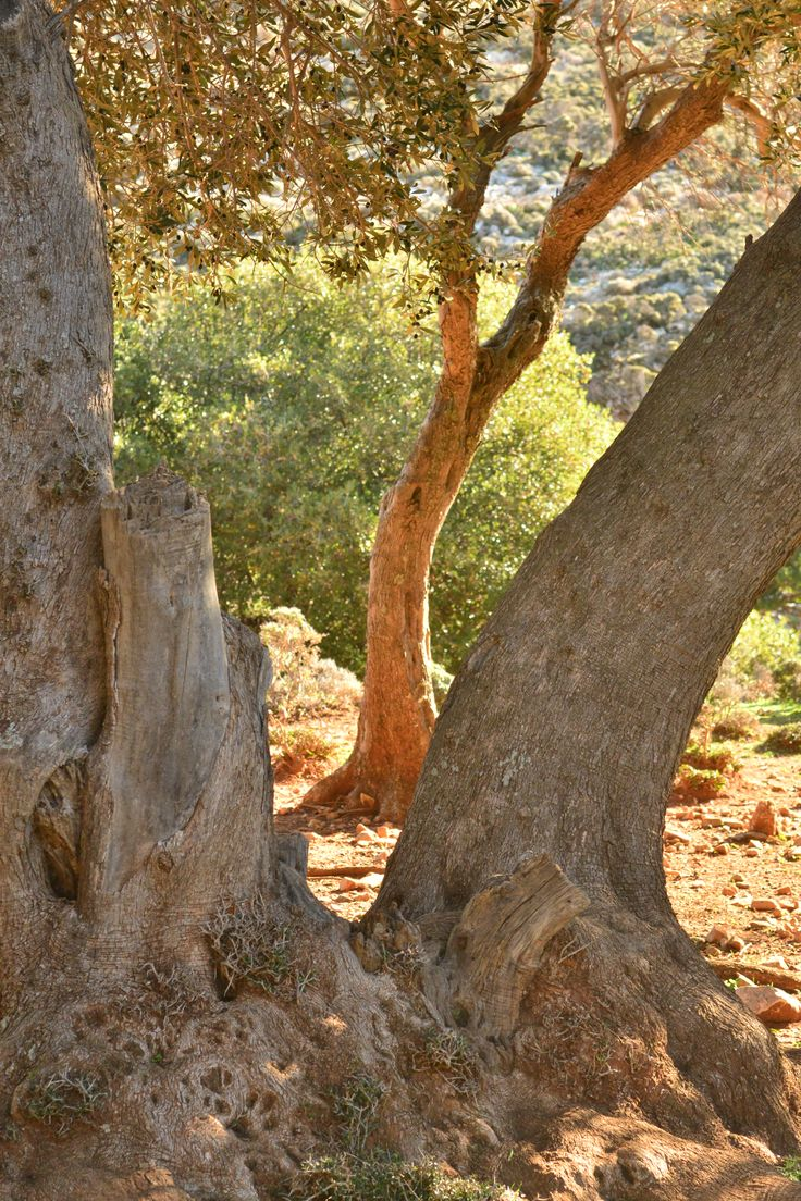 """""""Nature speaks in symbols and signs"""" - John Greenleaf Whittier #Skyros #Island #phenomenal #details"""