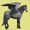 purebred spanish horse pegasus