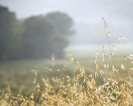 Beyond the Fields We Know: Thursday Poem - Fern Hill - a favorite summer poem and beautiful image