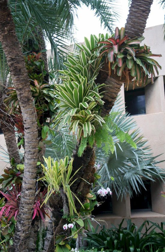 Bromeliad Ideas