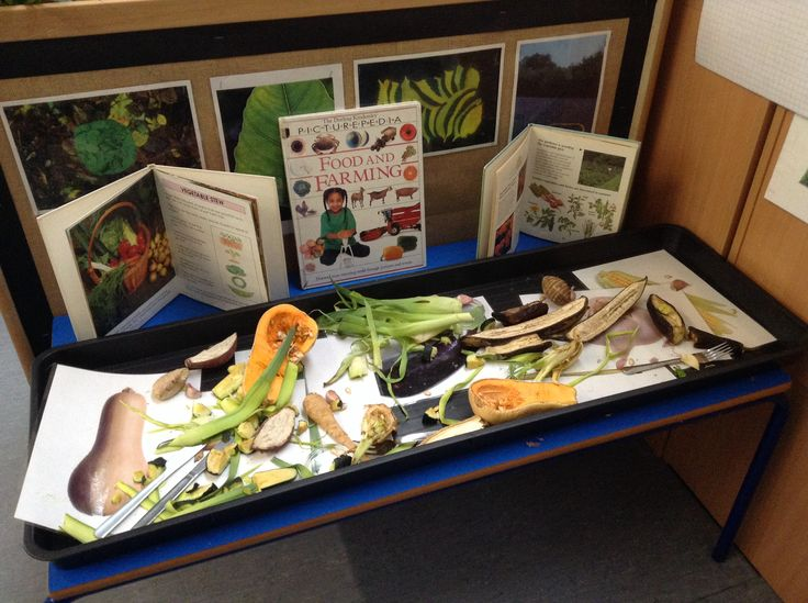 Vegetable investigation. A mix of vegetables, including lots of unfamiliar ones for the children to explore, encouraging them to use all their senses, and lots of language skills. Relevant books are available encouraging them to enjoy an increasing range of books and know that they carry information as well as stories.