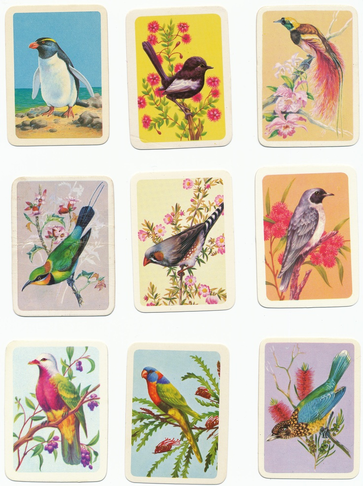 bird card collection