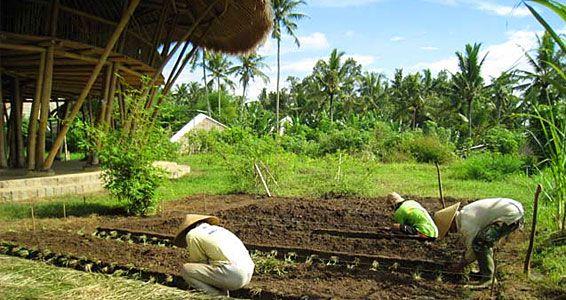 The 8 Major Principles of Bio-Intensive Gardening