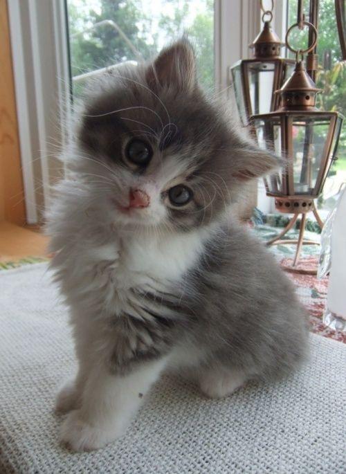 Cutie Pie...