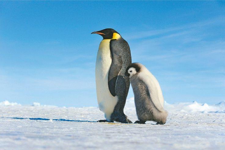 Kalendář 2015 - tučňáci  http://www.pg.cz/cs/produkt/3044-tucnaci-poznamkovy-kalendar-2015-30-x-30-cm