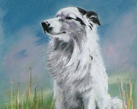 Dog Pastel Print - A3 - Border Collie, German Shepard cross, 5% of profits to Cornwall Air Ambulance Trust #dogs #art