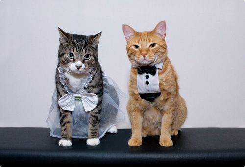 These cats!!   15 Animal Couples Who Are Ruining The Sanctity Of Marriage