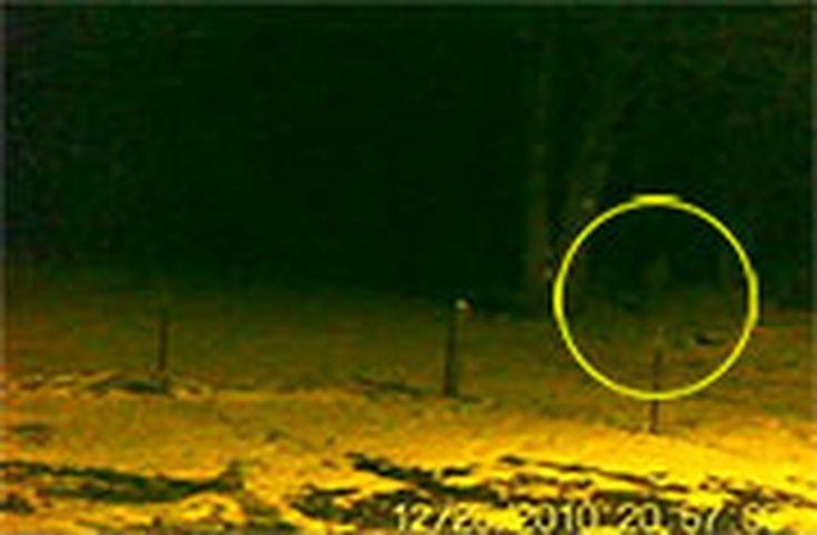Bigfoot Videos Sasquatch, Yeti and Skunk Ape: Christmas Bigfoot