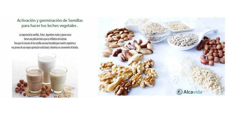 Activación de las semillas para hacer tus leches vegetales con agua alcalina