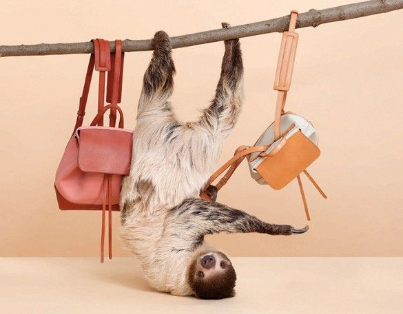 Mansur Gavriel's S/S 15 campaign featuring a cute sloth