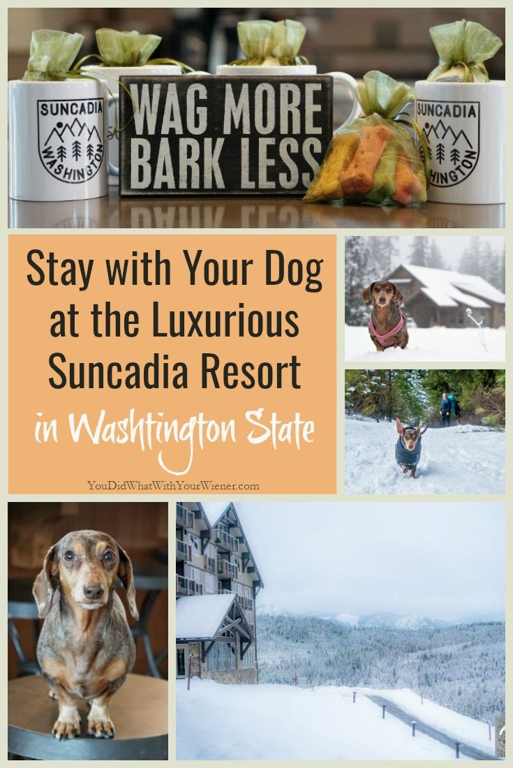 Adventure With Your Dog Near Seattle Pet Friendly Suncadia