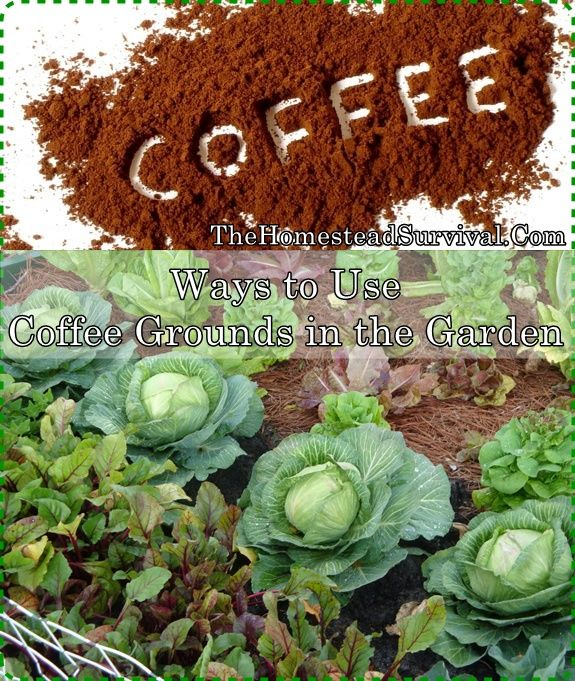 Ways To Use Coffee Grounds In The Garden Homesteading The Homestead Survival Com