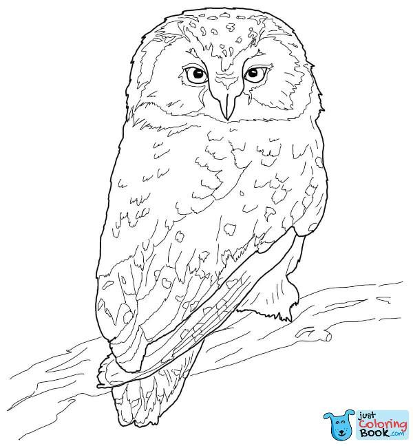 Boreal Owl Coloring Page Free Printable Coloring Pages Pertaining