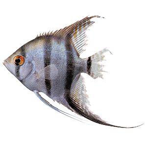 Fish Illnesses - How to Spot Them