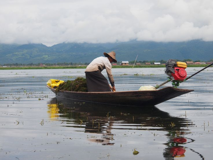 Hauling in the catch Inle Lake