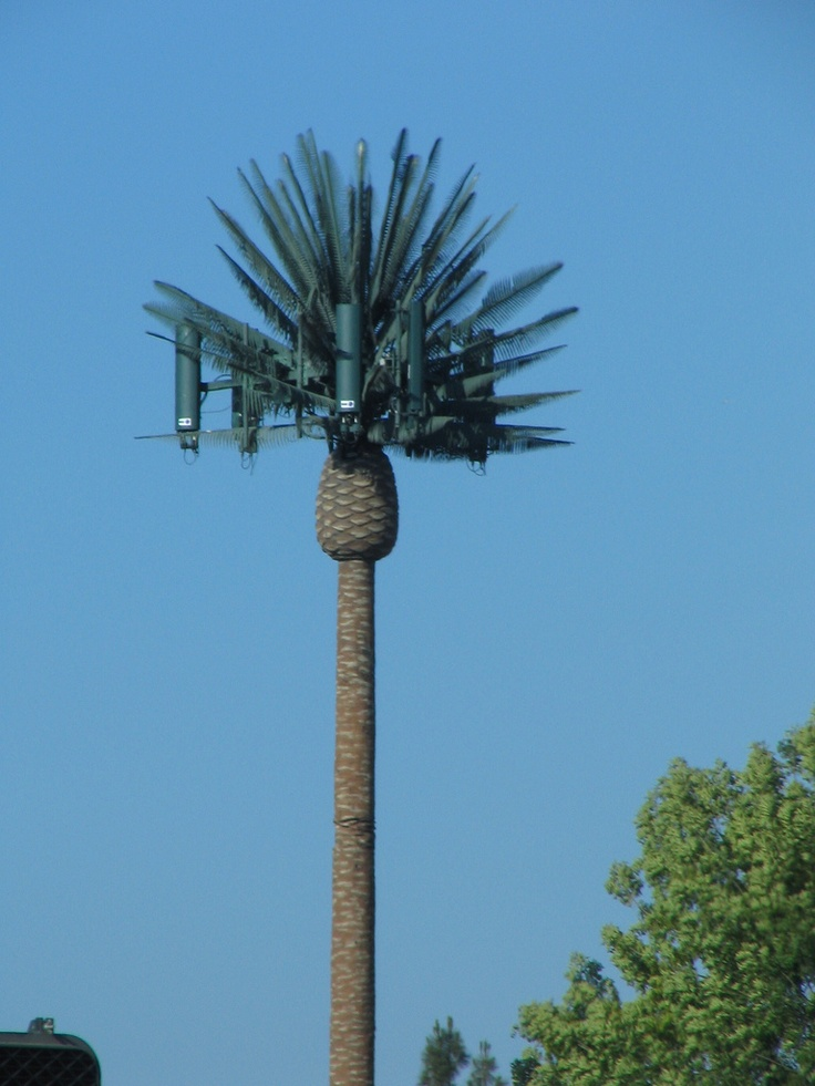 Cell towers that look like trees 10