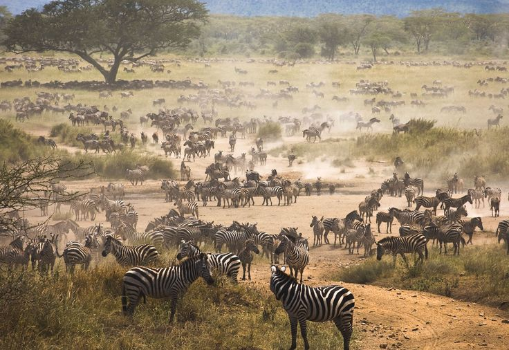 Serengeti National Park http://africatriedandtested.com/