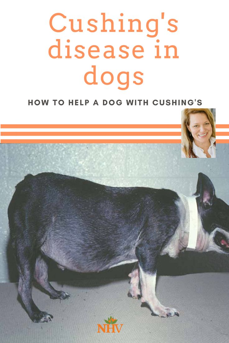 Best Food For Dogs With Cushing