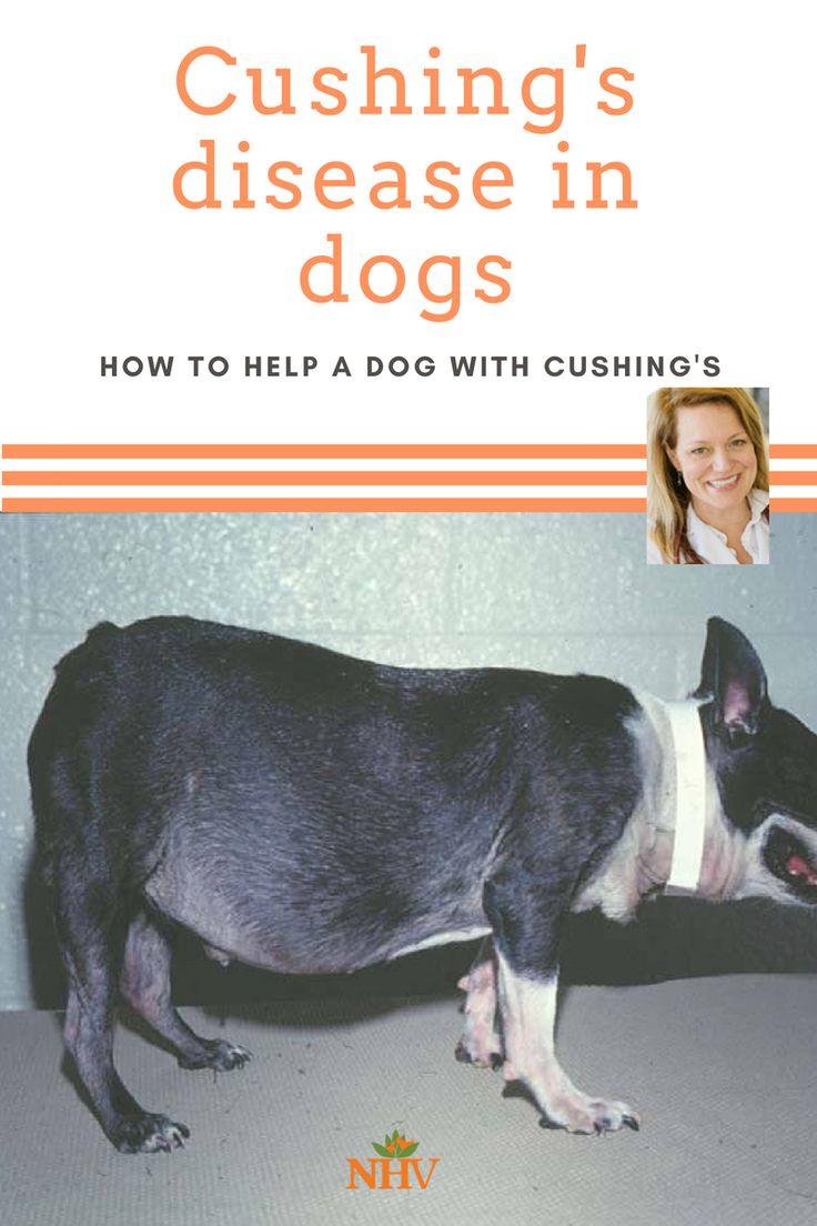 Best Dog Food For Cushing S Disease