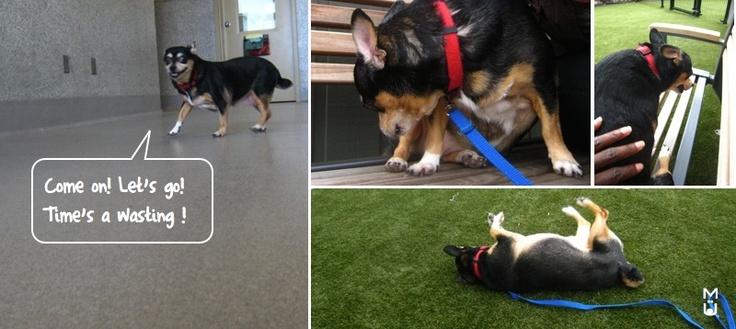Ottawa Dog Rescue Shelters